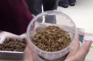 STEM_Night_mealworms-300x195