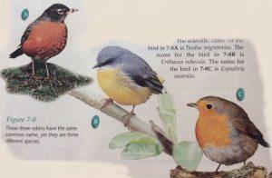 Binomial-nomenclature-birds-300x196